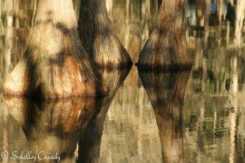 SC - Cypress Water Reflection-3