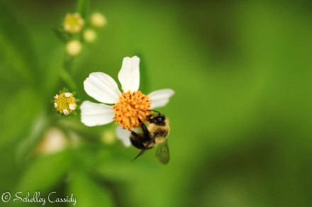 busybee (1)