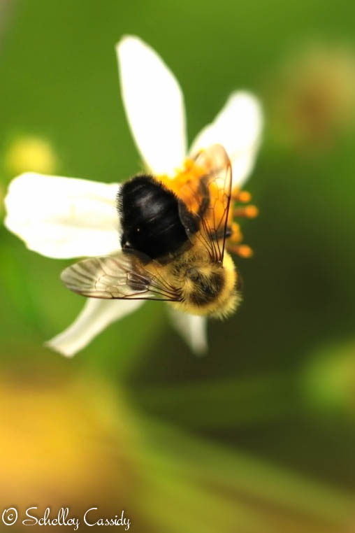 busybee (2)