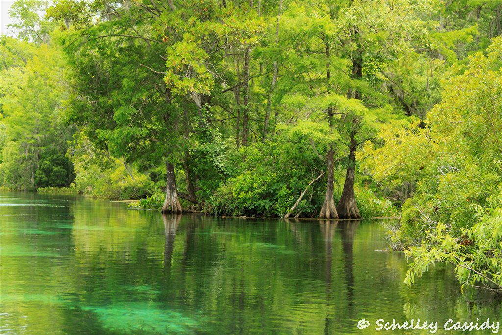 """wakulla springs black personals Hampton springs and resort hotel (ghost town) location – lat 30° 04' 5336"""" n, long 83° 39' 4625"""" w (sw¼ nw¼ ne¼ sec 6, t 5 s, r 7 e."""