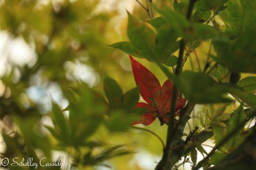 2013_09_17_9999_6-2