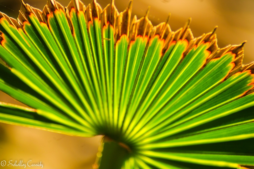 Palm Frond (1)