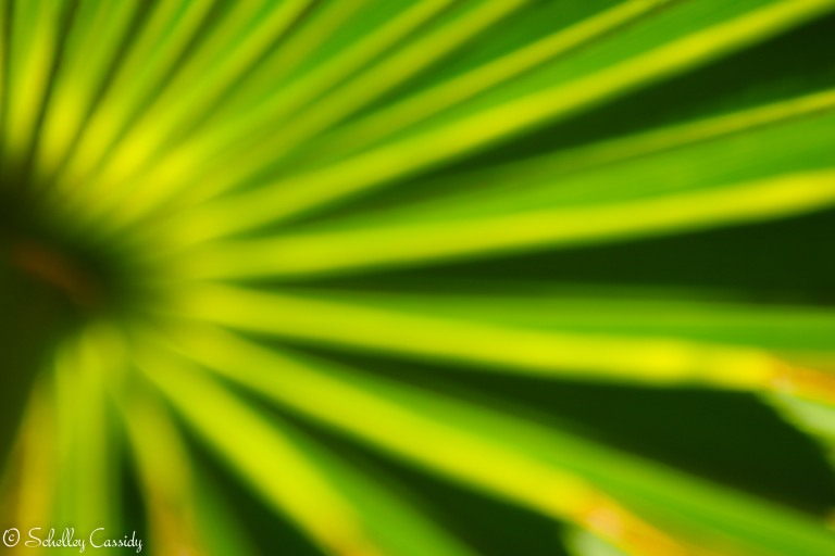 Palm Frond (2)