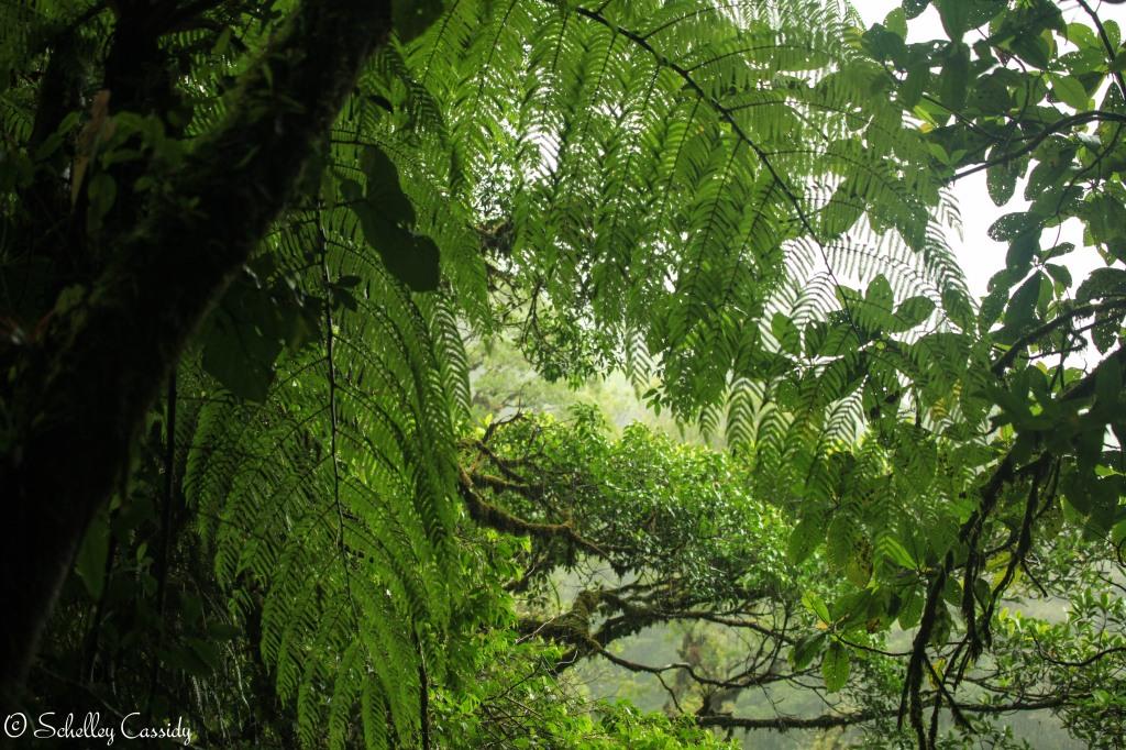 palm canopy la paz