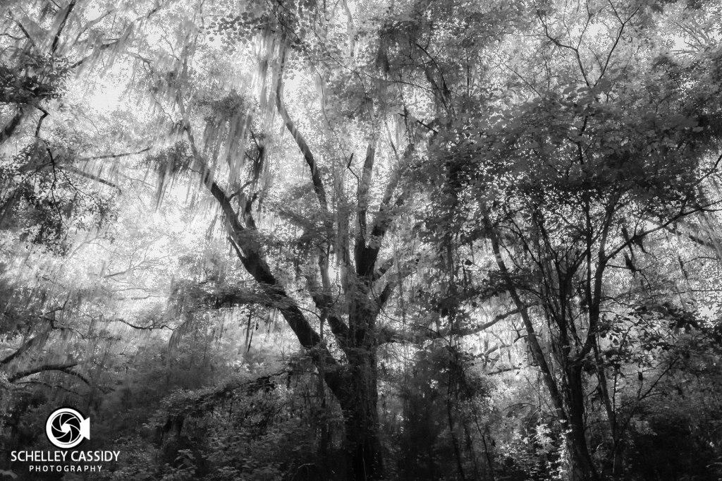 Wispy Tree